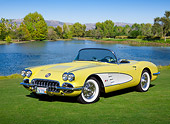 VET 02 RK0379 01
