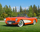 VET 02 RK0381 01