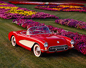 VET 02 RK0039 01
