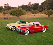 VET 02 RK0333 01
