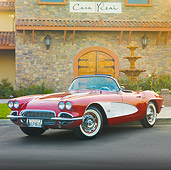 VET 03 RK0663 01