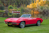 VET 03 RK0688 01
