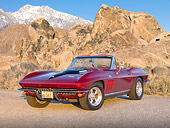 VET 03 RK0783 01
