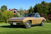 VET 03 RK0800 01