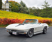 VET 03 RK0839 01