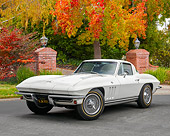 VET 03 RK0848 01