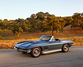 VET 03 RK0365 02