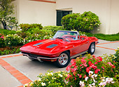 VET 03 RK0549 01