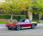 VET 03 RK0584 01