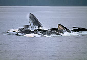WHA 02 GL0002 01