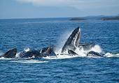 WHA 02 GL0006 01