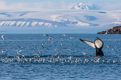 WHA 02 KH0007 01