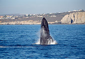 WHA 02 MC0002 01