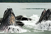 WHA 02 MC0007 01
