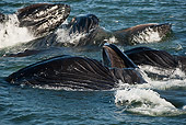 WHA 02 MC0009 01