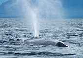 WHA 02 MC0021 01