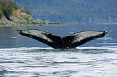 WHA 02 JM0003 01