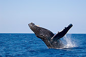 WHA 02 JM0005 01