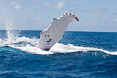 WHA 02 NE0001 01