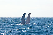 WHA 02 NE0002 01