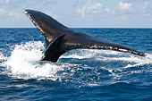 WHA 02 NE0003 01