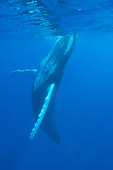 WHA 02 NE0007 01