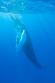 WHA 02 NE0008 01
