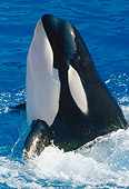 WHA 03 GL0005 01