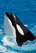 WHA 03 GL0007 01