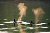 WHA 03 MC0002 01