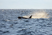 WHA 03 KH0001 01