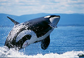 WHA 03 TL0002 01