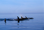 WHA 03 TL0005 01