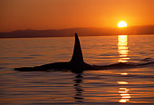 WHA 03 TL0006 01