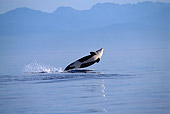 WHA 03 TL0010 01