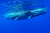 WHA 06 WF0003 01
