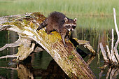 WLD 01 BA0001 01