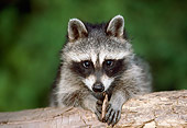 WLD 01 GR0005 01