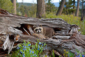 WLD 01 KH0001 01