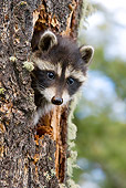 WLD 01 KH0002 01