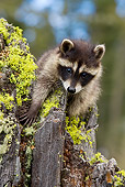 WLD 01 KH0007 01