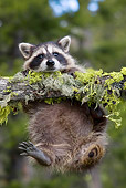 WLD 01 KH0009 01