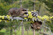 WLD 01 KH0010 01
