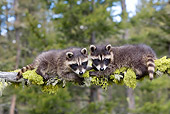 WLD 01 KH0011 01