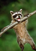 WLD 01 GR0001 01