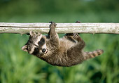 WLD 01 GR0002 01