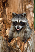 WLD 01 GR0004 01