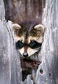WLD 01 NE0001 01