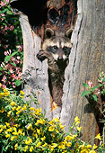 WLD 01 NE0002 01
