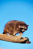 WLD 01 RF0001 01
